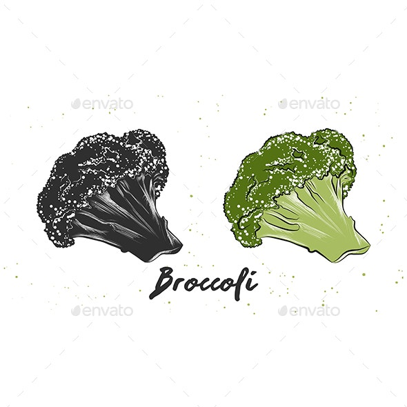 Hand Drawn Sketch of Broccoli - Food Objects