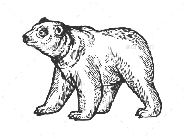 Bear Goes on Four Legs Sketch Engraving Vector - Animals Characters