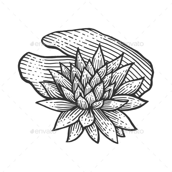 Water Lily Flower Sketch Engraving Vector - Miscellaneous Vectors