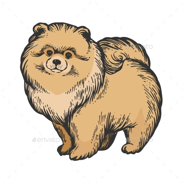 Spitz Dog Animal Color Sketch Engraving Vector