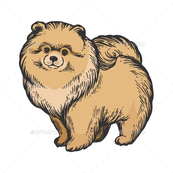 Spitz Dog Animal Color Sketch Engraving Vector - Miscellaneous Vectors
