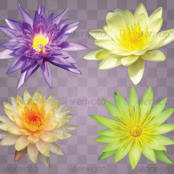 Lotus Flower Set (4)
