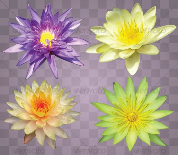 Lotus Flower Set (4) - Nature & Animals Isolated Objects