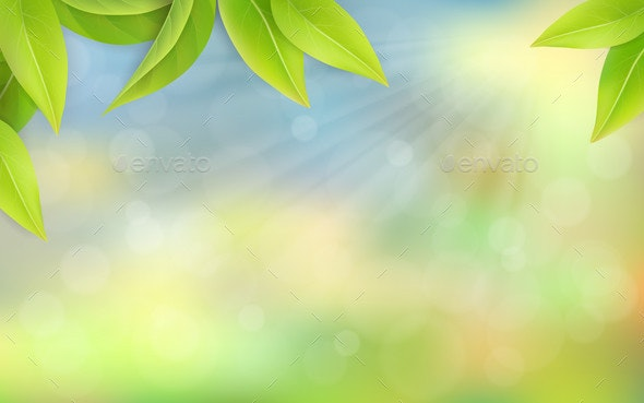 Green Leaves on a Blurred Background. - Flowers & Plants Nature