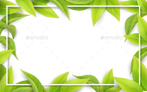 Green Leaves on White Background - Flowers & Plants Nature