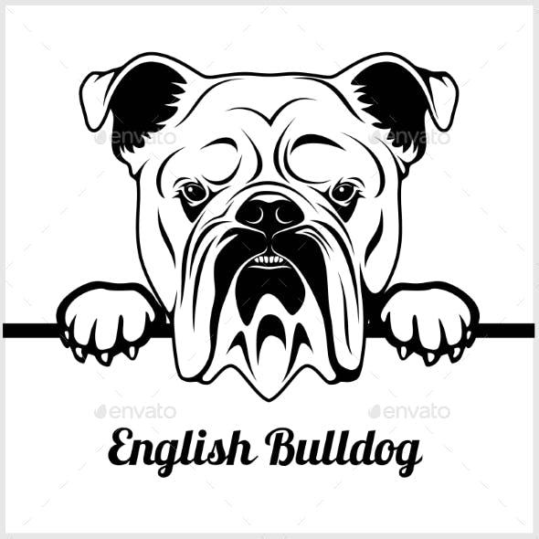 English Bulldog Face