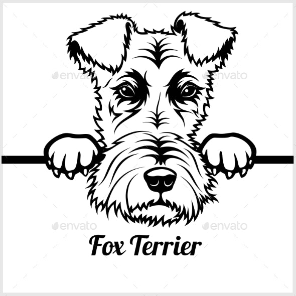 Fox Terrier Face - Animals Characters