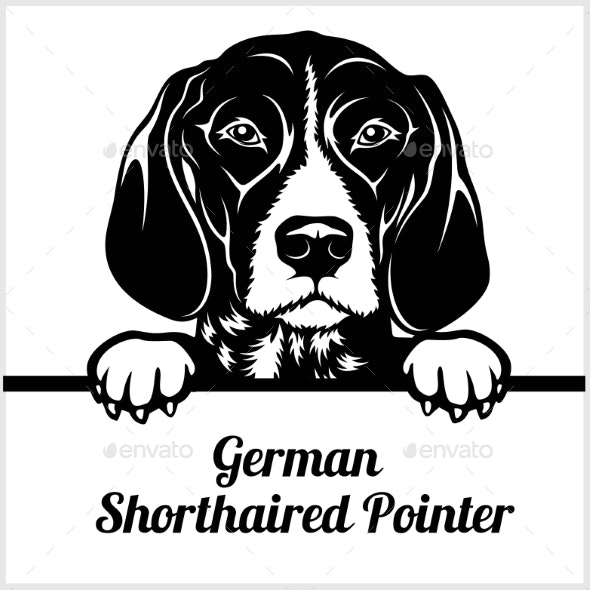 German Shorthaired Pointer - Animals Characters