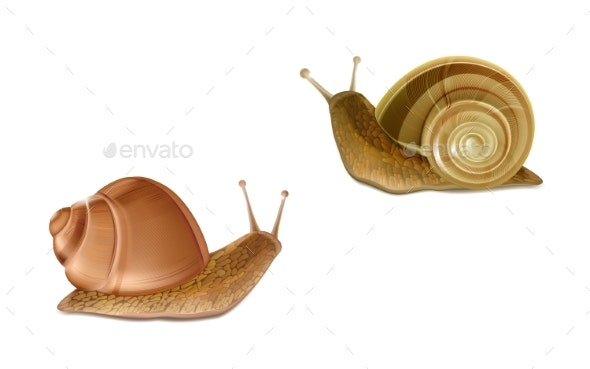 Roman Snails French Cuisine - Animals Characters