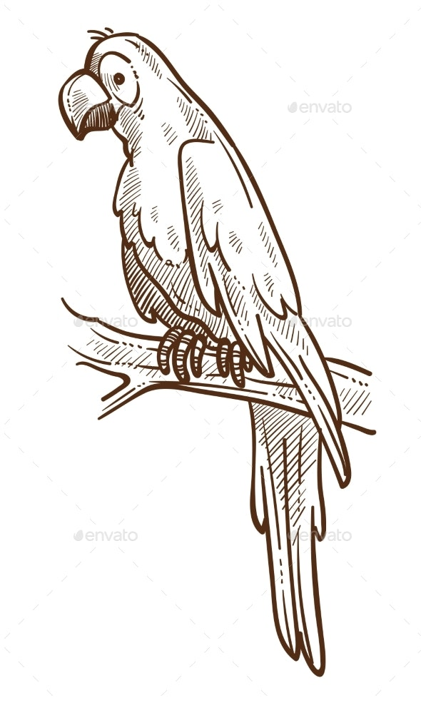 Parrot on Branch Tropical Species Macaw Isolated - Animals Characters