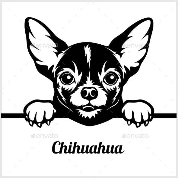 Chihuahua Peeking Face