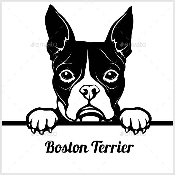 Boston Terrier Peeking Face - Animals Characters