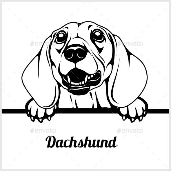 Dachshund Peeking Face - Animals Characters