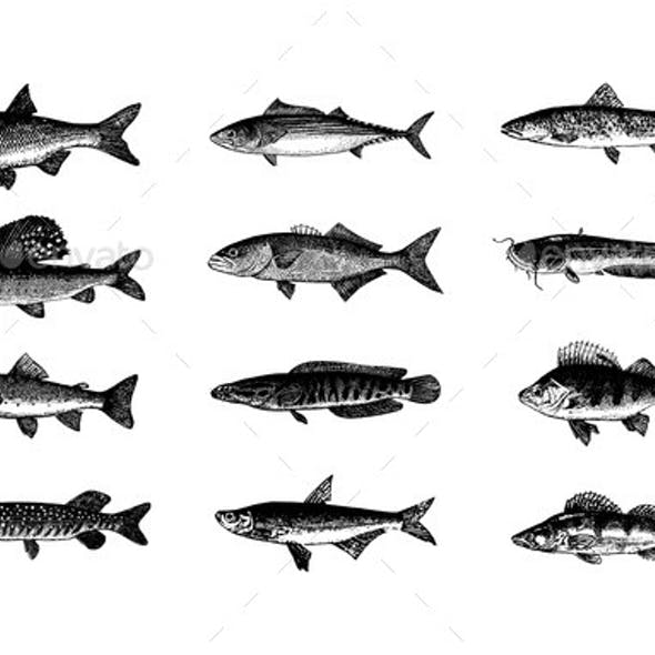 Vector Hand Drawn Fishes Sketch Illustration
