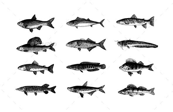 Vector Hand Drawn Fishes Sketch Illustration - Animals Characters