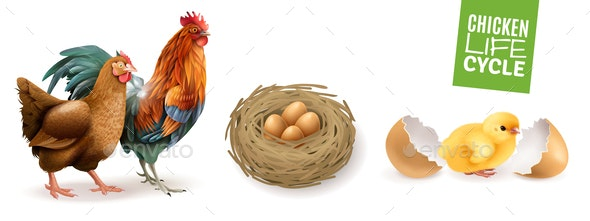 Chicken Life Cycle Set - Animals Characters
