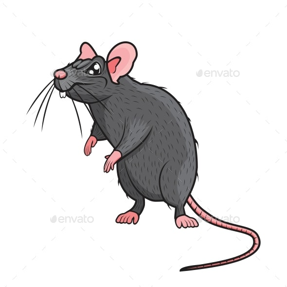 Angry Rat - Animals Characters