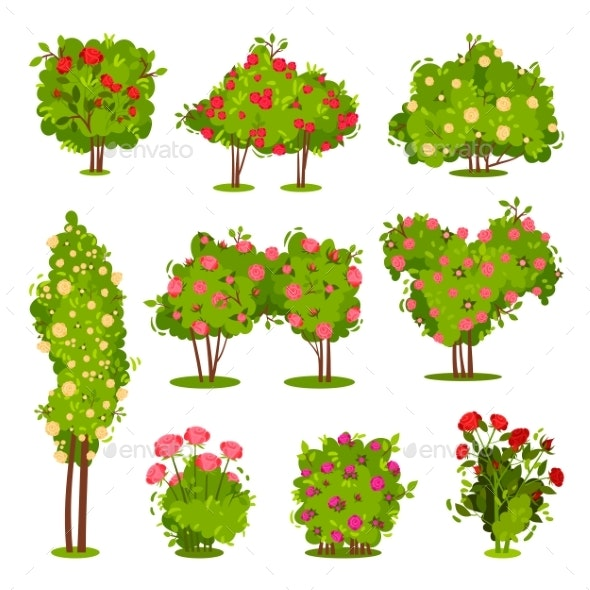 Flat Vector Set of Roses Bushes - Flowers & Plants Nature