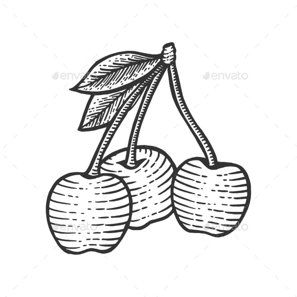 Cherry Berry Cketch Engraving Vector Illustration - Miscellaneous Vectors