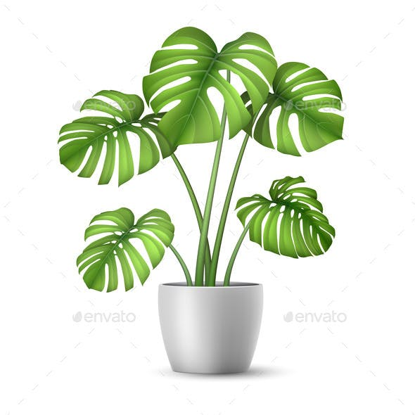 Realistic Vector Monstera in a Flower Pot