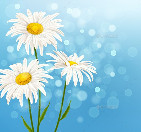 White Daisy Flowers on a Blue Background - Flowers & Plants Nature