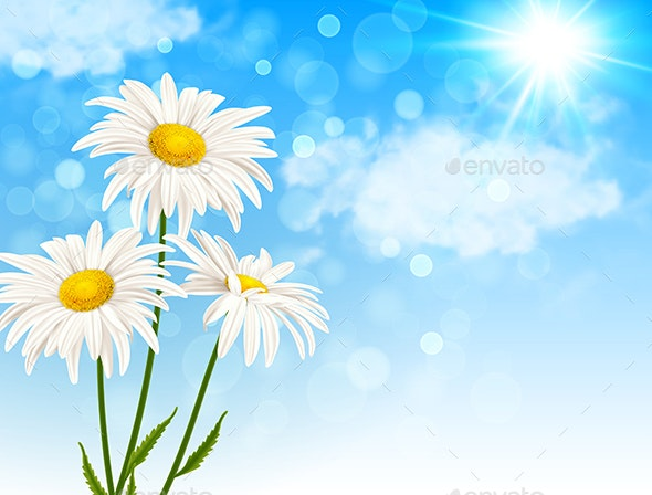 White Daisy Flowers and Clouds - Flowers & Plants Nature