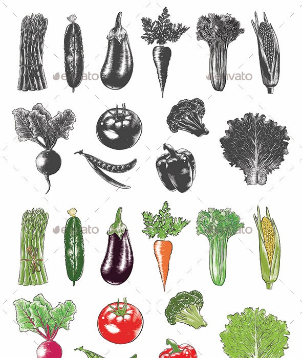 Collection of Hand-Drawn Vegetables - Food Objects