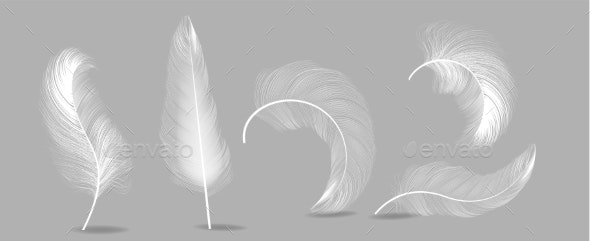 White Feathers Set Vector - Organic Objects Objects
