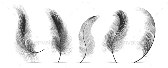 Black Feathers Set Vector - Organic Objects Objects