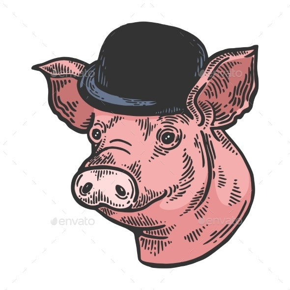 Pig Animal in Bowler Hat Sketch Color Engraving - Man-made Objects Objects