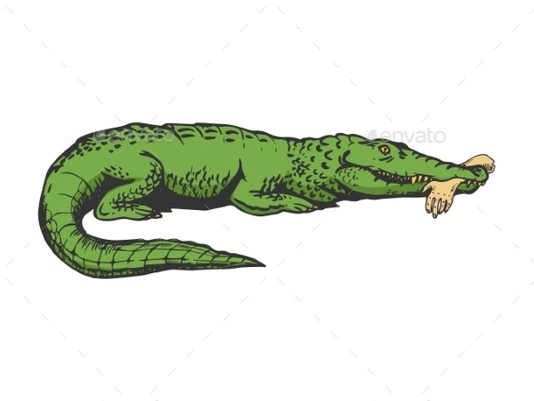 Alligator with Hand Color Sketch Engraving Vector - Animals Characters