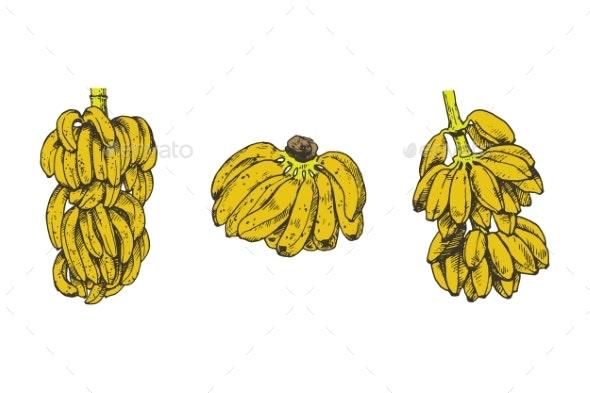 Vector Illustration of Banana Fruit Sketch - Flowers & Plants Nature