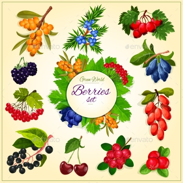 Vector Wild Berries and Fruits Set Poster - Food Objects