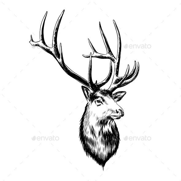 Hand Drawn Sketch of Deer in Black - Animals Characters