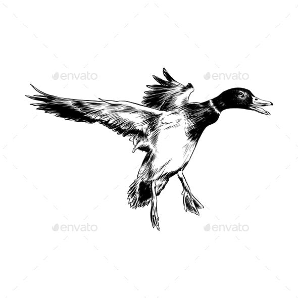 Hand Drawn Sketch of Flying Duck