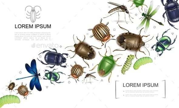 Realistic Insects Colorful Collection - Animals Characters