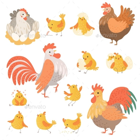 Chicken and Rooster - Animals Characters