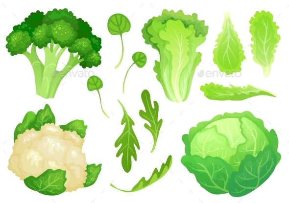 Cartoon Cabbages Fresh Lettuce Leaves - Food Objects