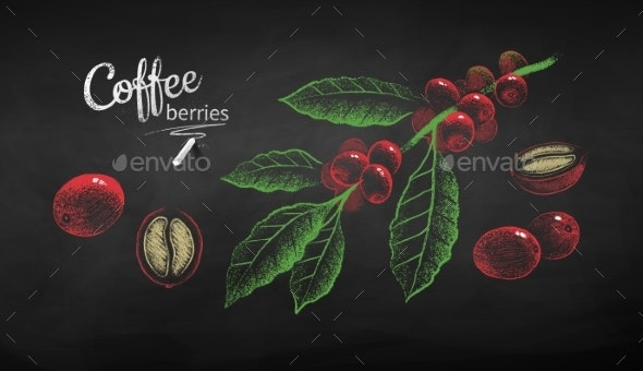 Sketches Set of Coffee Branch and Berries - Food Objects