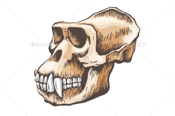 Gorilla Monkey Skull Vector - Miscellaneous Vectors