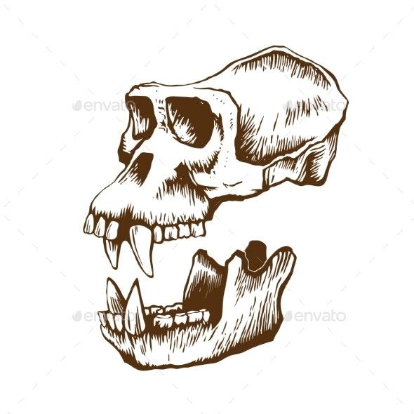 Garrile Monkey Skull - Animals Characters