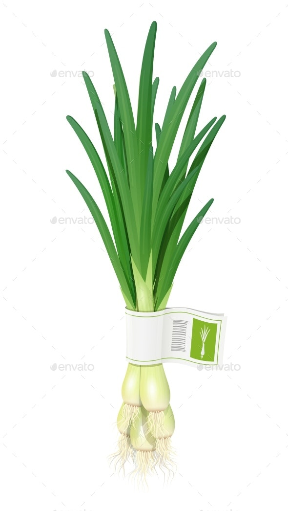 Onion Ripe Green Vegetable - Food Objects