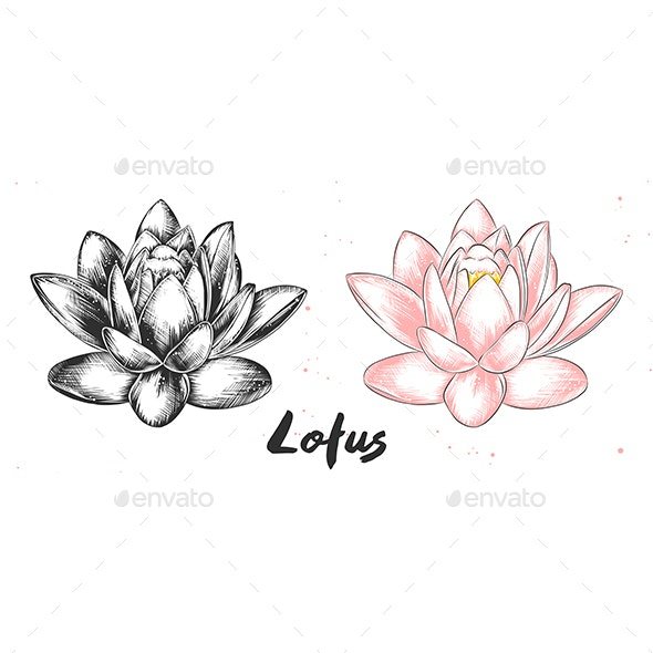 Hand Drawn Sketch Of Lotus Flower By Miaakimo Graphicriver