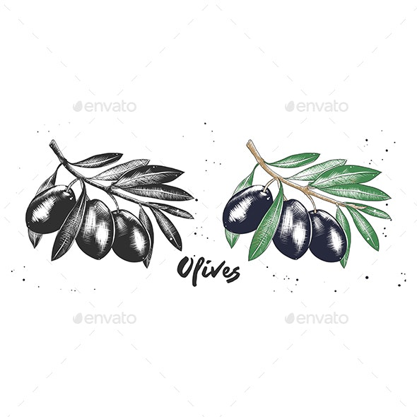 Hand Drawn Sketch Of Olives - Flowers & Plants Nature
