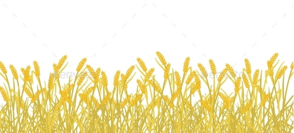 Cereal Rye Field Banner Background - Flowers & Plants Nature