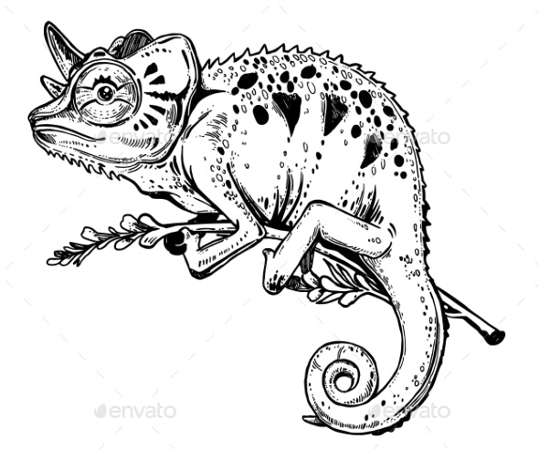 Chameleon Lizard on a Tree Branch - Animals Characters