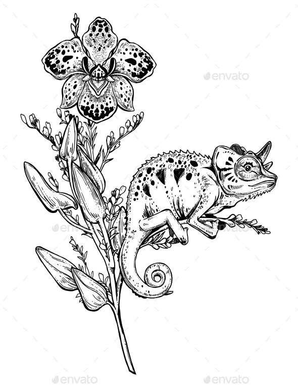 Chameleon Lizard on Orchid Branch - Animals Characters