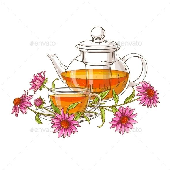 Echinace Purpurea  Tea Vector - Health/Medicine Conceptual