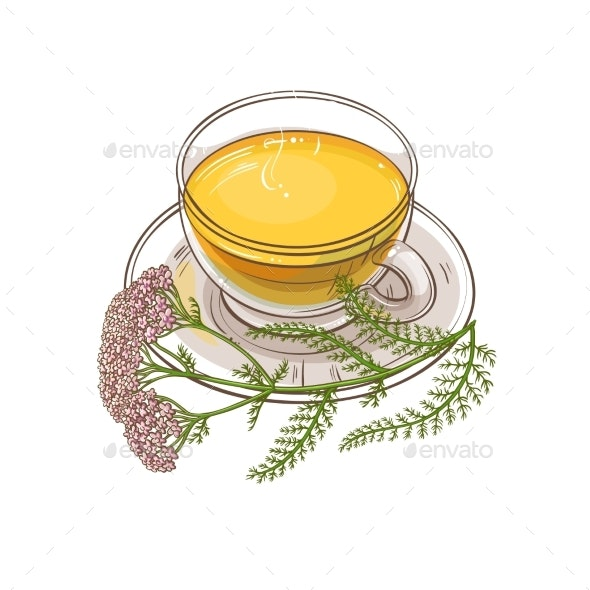 Yarrow Tea Illustration - Food Objects
