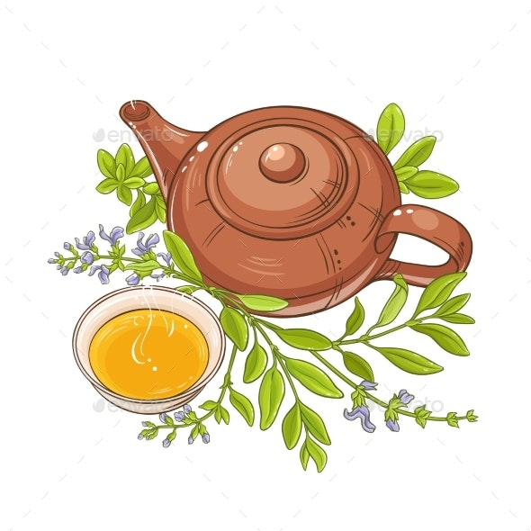 Sage Tea Vector Illustration on White Background - Food Objects